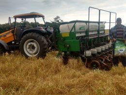 Abertas as inscrições para compra da semente de milho do programa Troca-troca